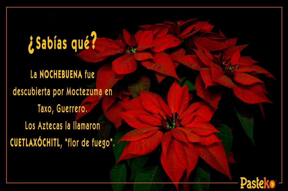 La flor más emblemática de la #Navidad e...