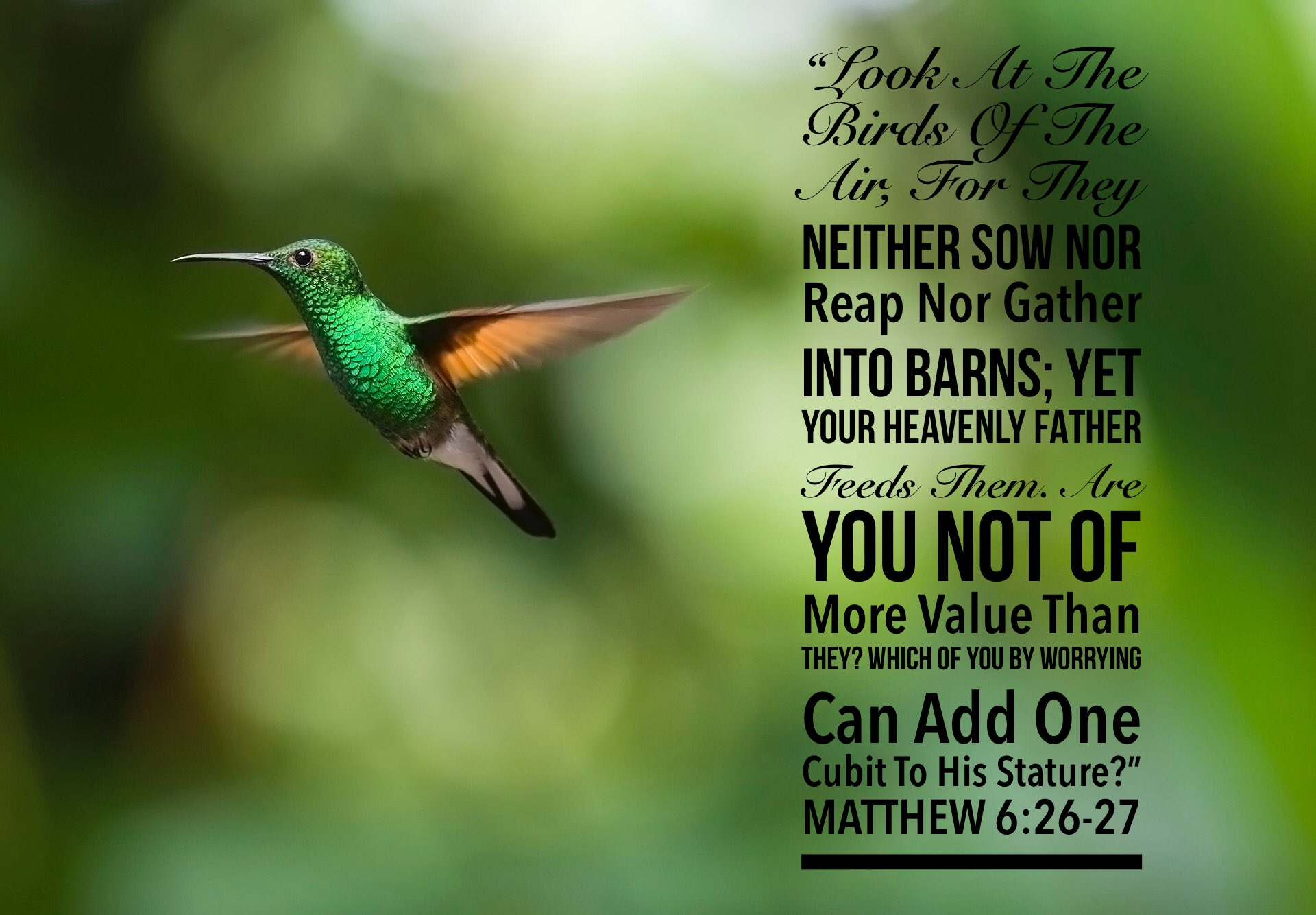 """Why B Mad on Twitter: """"MATTHEW 6:26-27 """"Look At The Birds Of The ..."""