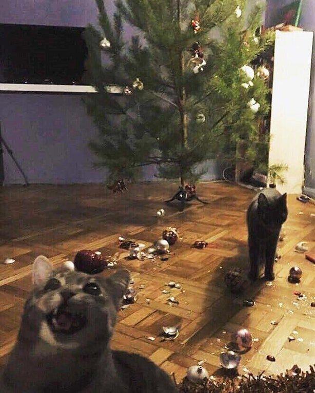 クリスマス終了のお知らせ猫に壊されたツリーが悲しすぎる