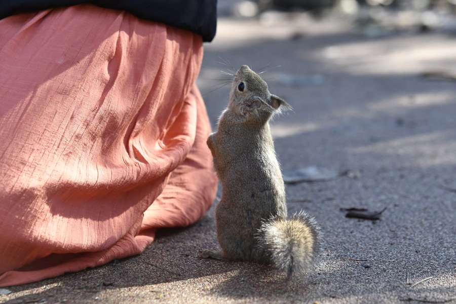 サンタさん、見ませんでしたかぁ!! #井の頭自然文化園  #ニホンリス #くりすます