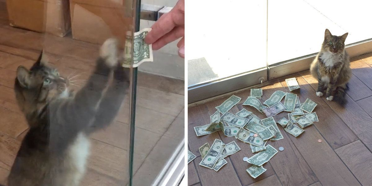 This office cat loves money so much he's stealing it from strangers 💵