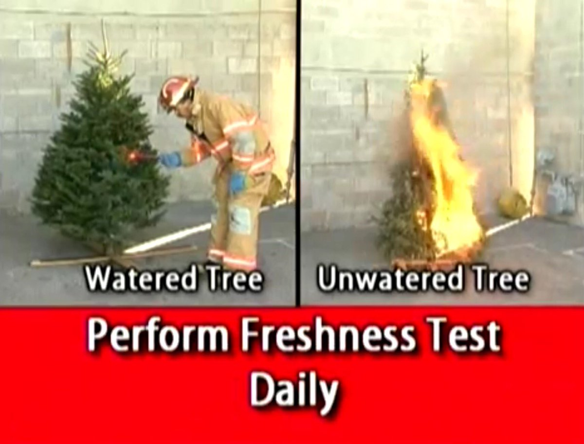 How Often To Water Christmas Tree.Las Vegas Firerescue On Twitter Merry Christmas Getting