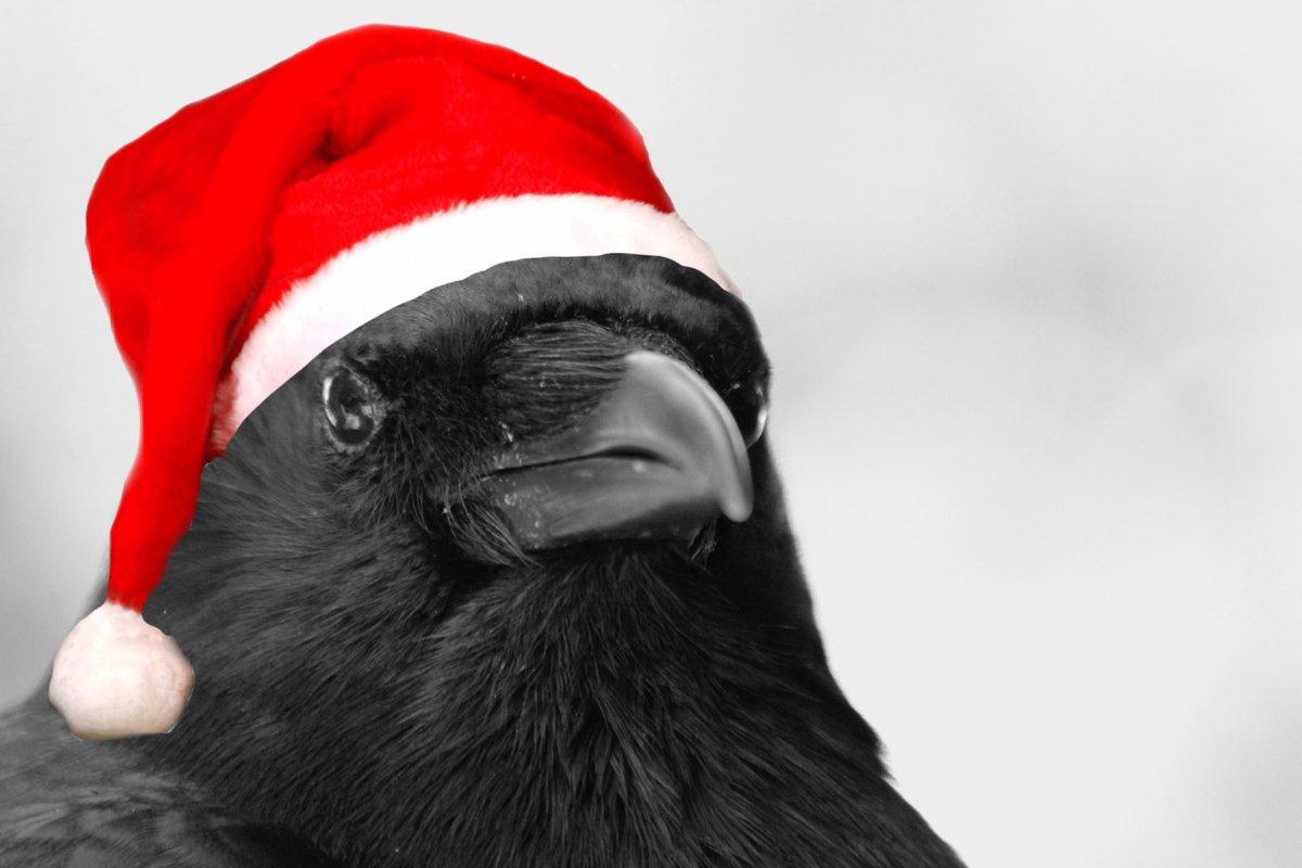 Merry Crowsmas ! #santacaws #happyholidays<br>http://pic.twitter.com/Zt7G2tGXbZ