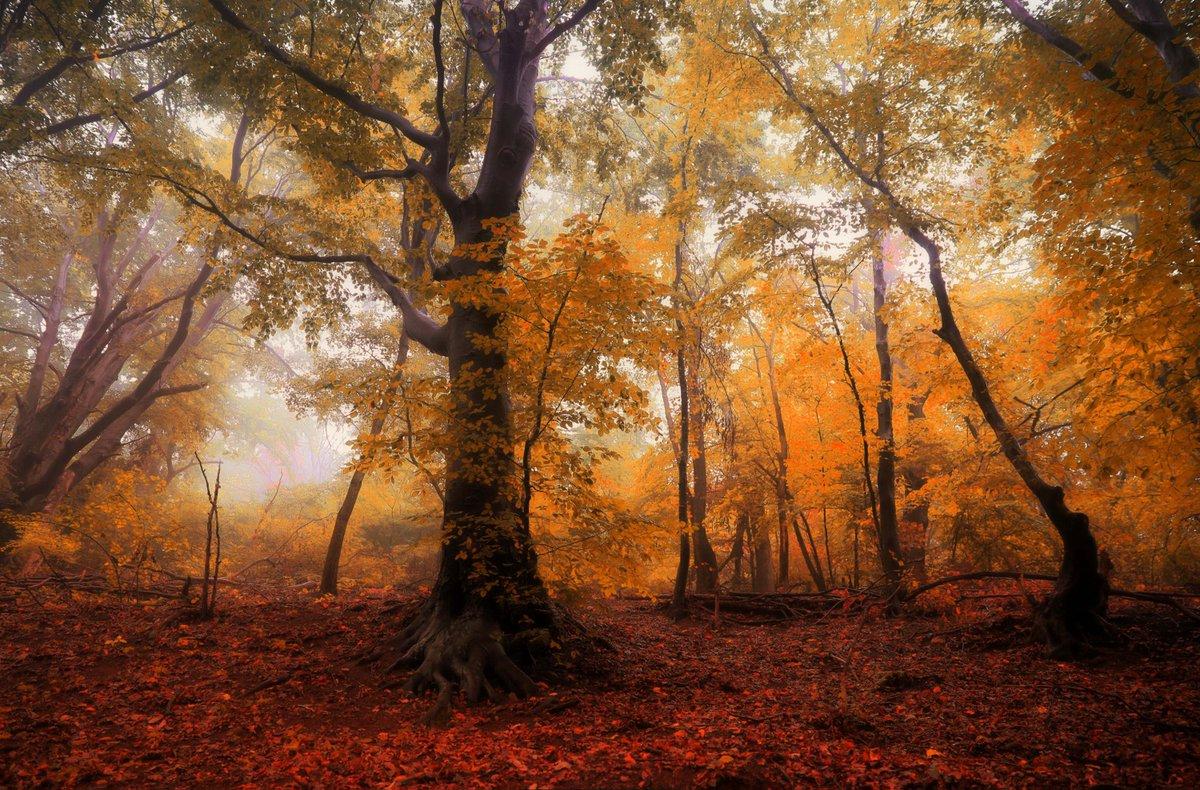 Hd wallpapers on twitter image by robert c download app - Nature wallpaper status ...
