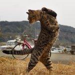 もしかして達人なの?猫の達人級の美しさを持ったショットが話題