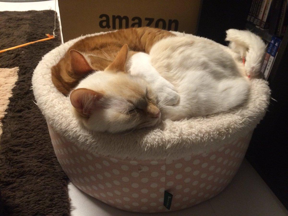 狭い中に一緒に寝てるだけでも可愛すぎるのにおまんじゅうがしらたまに手を回してるところとか事件。可愛さの暴力。有罪