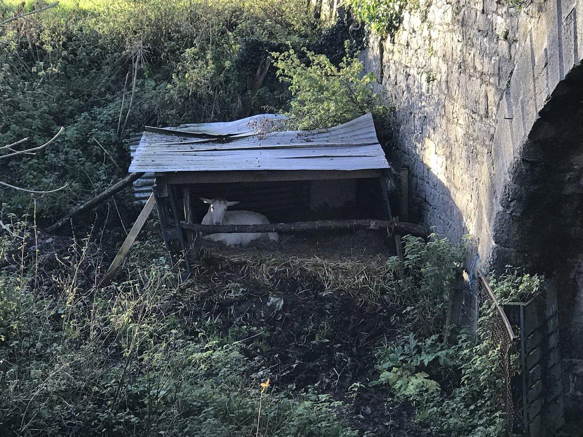 Came across this natural crib at Blackwa...