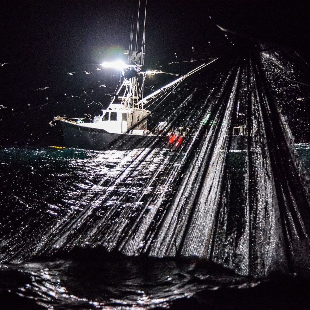 Encircled by F/V Alice Anne's net, F/V Three Boys holds squid under her lights while the mothership winds in and purses the net. #commercialfishing #fishinglife #lightboat #eatmoreseafood #trawlife #freshseafood #squidfishing #calamari #goodday #wildharvest #wildcaught #work…