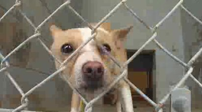 Animal Shelters warn not to give pets as a gift this holiday season; many end up back in the shelter https://t.co/AX1p0kEGWd