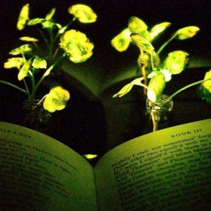 Crean plantas nanobiónicas que emiten lu...