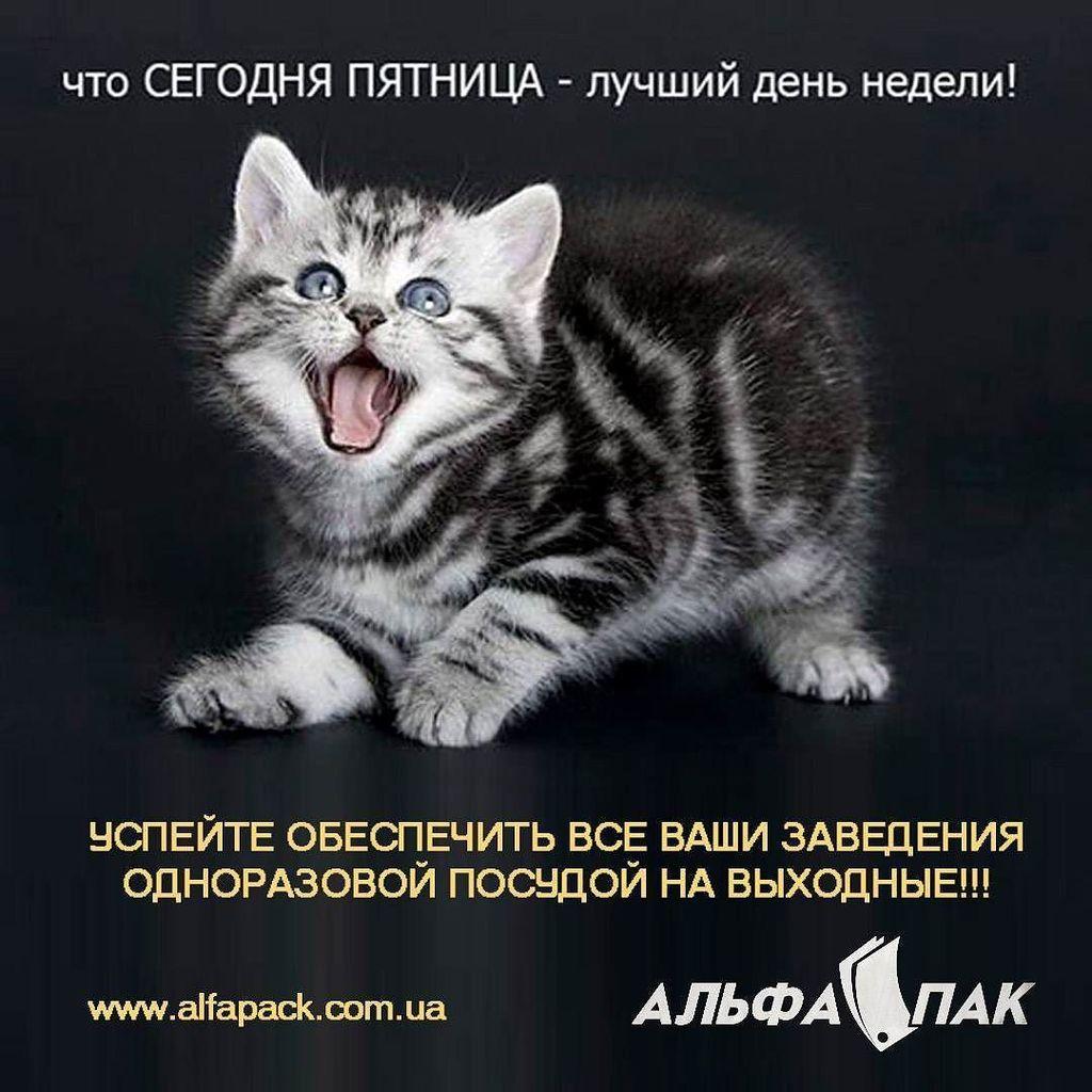 Для, открытки хорошей пятницы с кошками