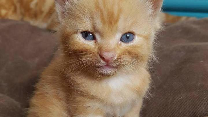 Justice for Kitten beaten to death by st...