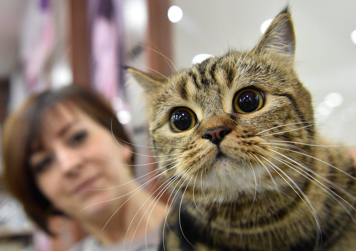 Qui arrêtera le tueur en série de chats du Royaume-Uni? https://t.co/oDt5CyANby
