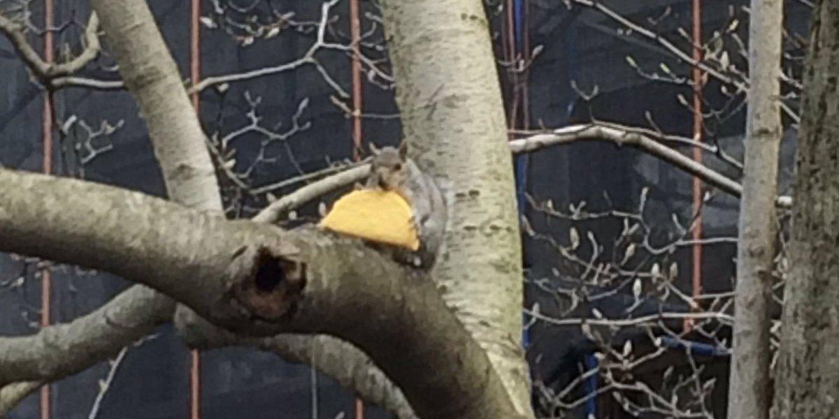 다람쥐가 자기 몸만 한 타코를 먹다 https://t.co/8opkpDEnbV