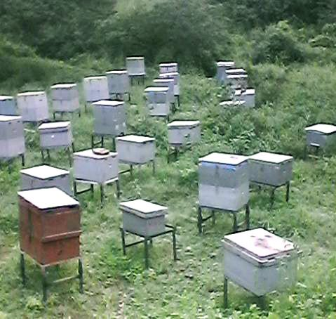 The Result   Farmers Produce 10 15kg From One Beehive U0026 Prices Declined  From 800Nkf/kg To 300Nkf/kg U0026 Below.pic.twitter.com/LeHtv2KoKi
