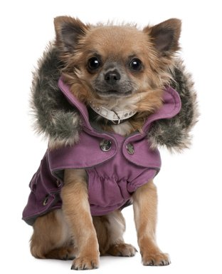 Keep your #pets warm this winter with a cute sweater! #FolsomVet #Folsom #CA<br>http://pic.twitter.com/OmlxV9ard0