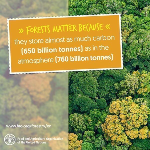 #DYK #Forests store nearly as much carbo...