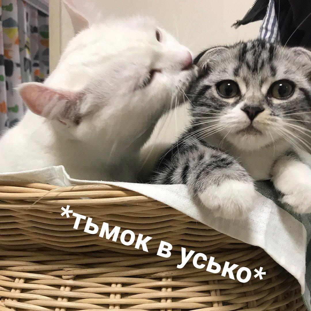 картинка с надписью котеночек неволе