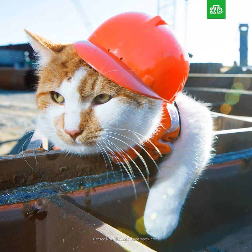 Стало известно, что первым по мосту через Керченский пролив пойдет кот Мостик. В 2015 году его подобрали первые охранники объекта. А теперь у главного куратора стройки века есть личный фотограф, водитель и тысячи подписчиков в соцсетях