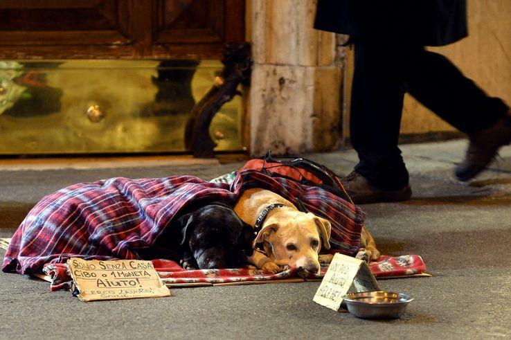 Les animaux indésirables des villes : pourquoi l'espace urbain serait-il réservé aux êtres humains ? https://t.co/We2NGUwAXI