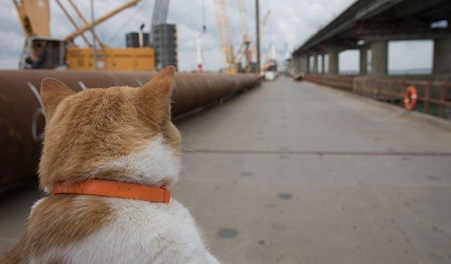 Кот Мостик первым пойдет в Крым по новому мосту : https://t.co/Dzpob8WJn0  #Крым #крымскиймост