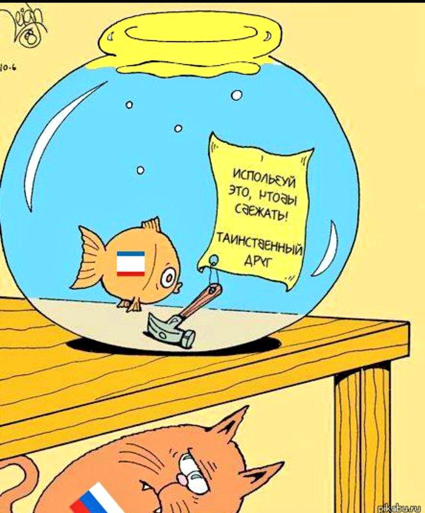 Картинка селфи, смешные картинки про аквариум
