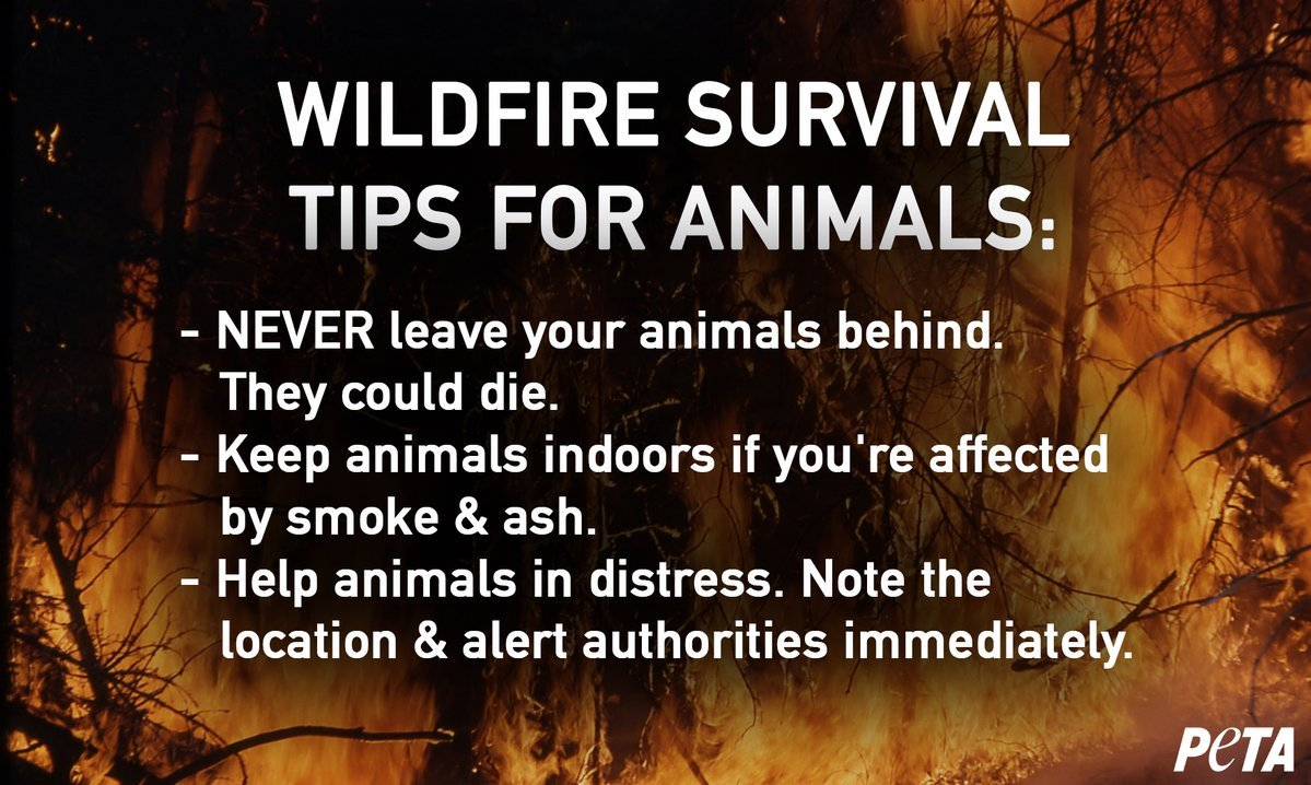 @LATvives Please share to remind everyone: animals MUST stay with their guardians during #ThomasFire evacuations; they will die if abandoned. Lifesaving tips: https://t.co/oT07Eib9yi