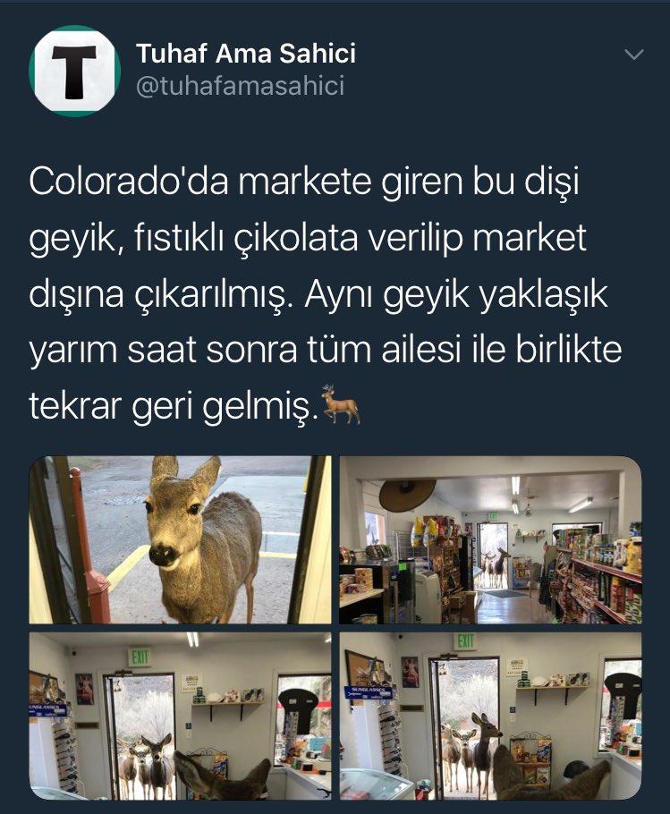 RT @furkantahamusic: Bu şey değil mi ya bayramda para veren daireyi arkadaşlarına söylemek https://t.co/KkQowHD0pg