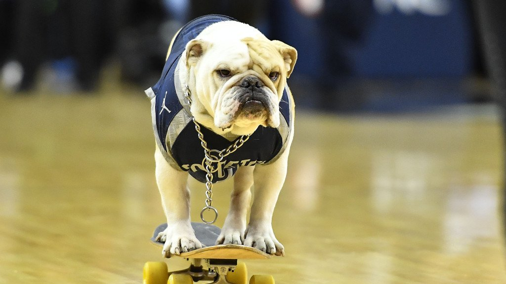 Jack the Bulldog GeorgetownJack Twitter