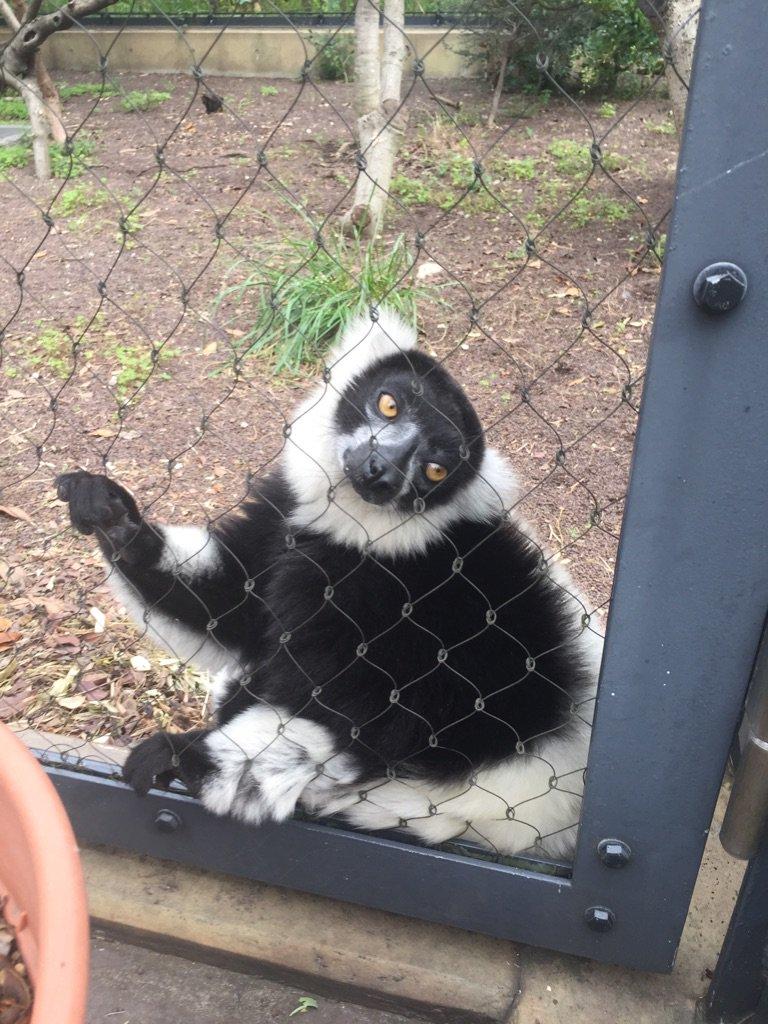 開、園  してます。 #おはようございます #上野動物園 #開園