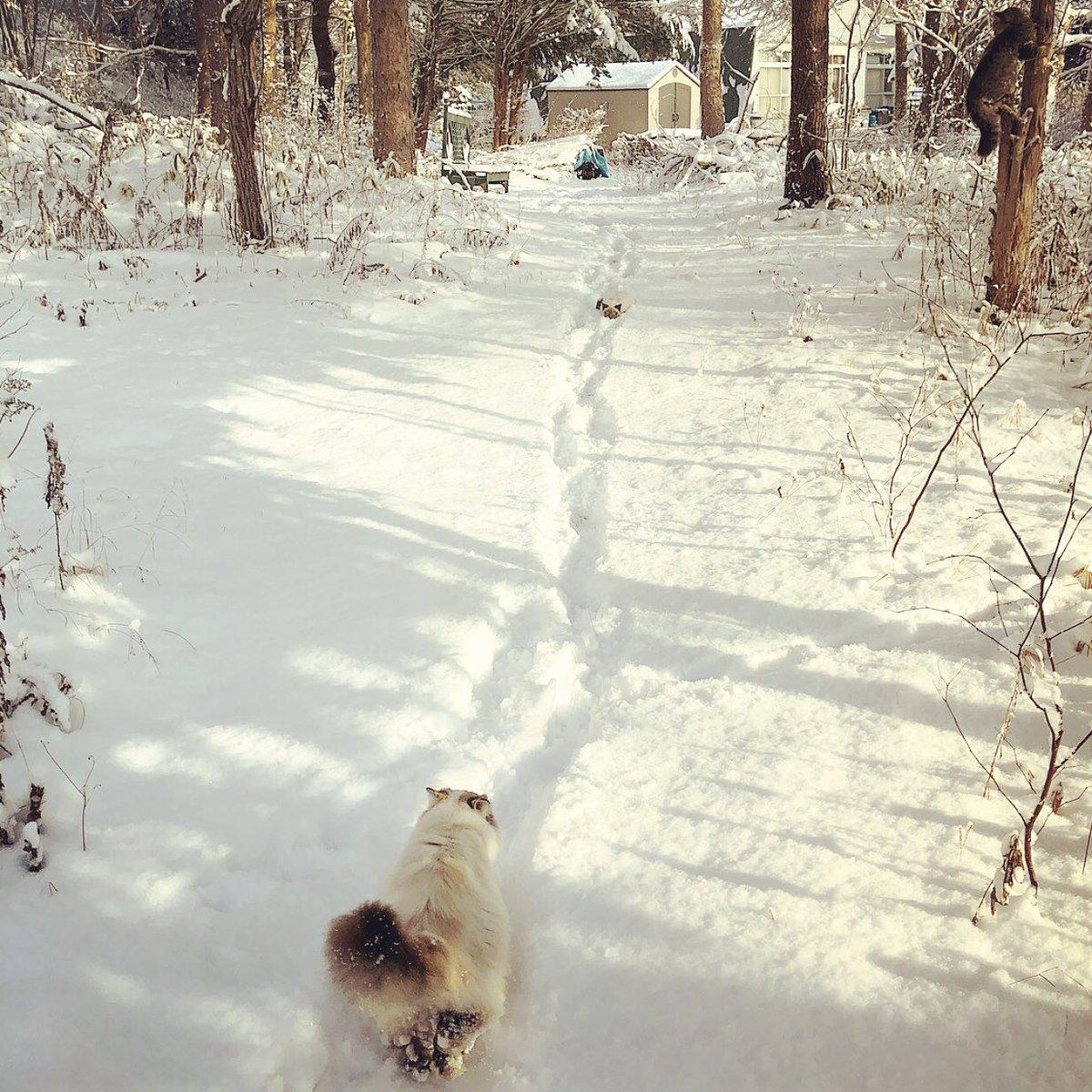 お散歩モフモフ。 (*ΦдΦ)………なにかいる……。。