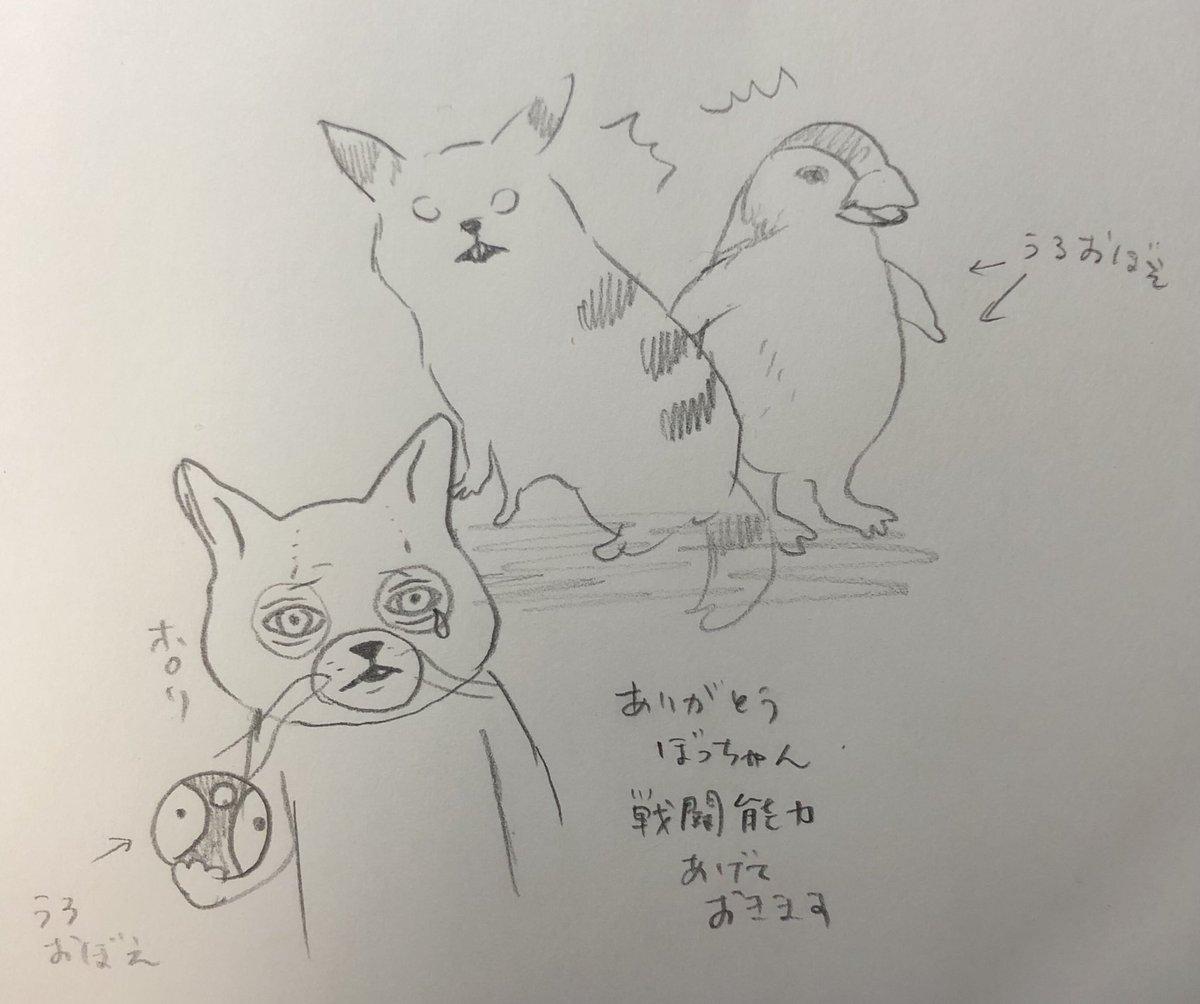 """ヒグチユウコ on twitter: """"息子にあんたのリアルポケモンは?と聞い"""