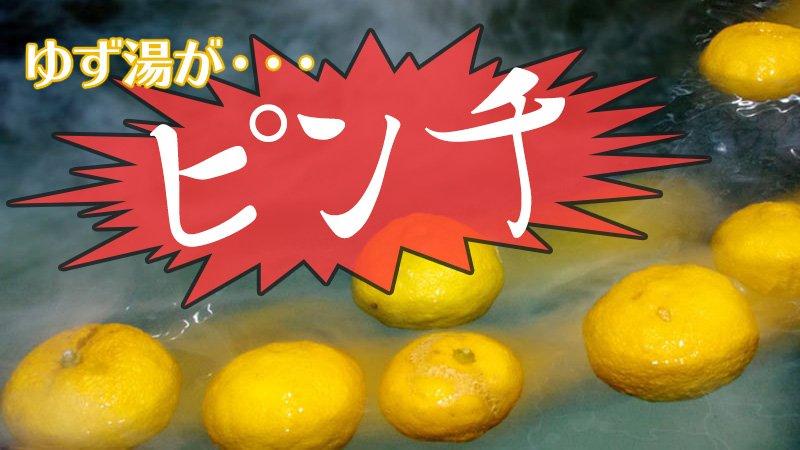 【今年は柚子がお高い!?】今月22日の冬至には「柚子湯」に入るという人が多いでしょうが、今年は台風の影響で品薄・割高になるため、早めに入手しておいたほうが良さそうです! https://t.co/9Puc7Dxpwp https://t.co/RCiJ3u5kOK