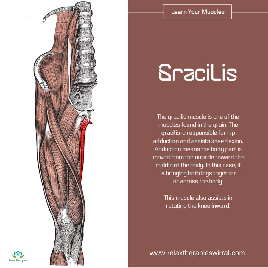 Relax Therapies On Twitter The Gracilis Muscle Is In The Groin
