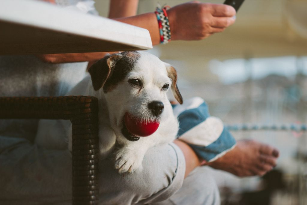 Through 12/31 @paypal Giving Fund will donate 101% when you give to @PetsforPatriots in support of #veterans + shelter pets! Yes - 101%!! Make your tax-deductible gift now:  https:// buff.ly/2otQAlN  &nbsp;   <br>http://pic.twitter.com/ZR2Ojq4V8O
