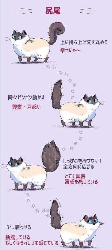 これでばっちり理解できちゃう?猫の気持ちを画像でわかりやすくご紹介!