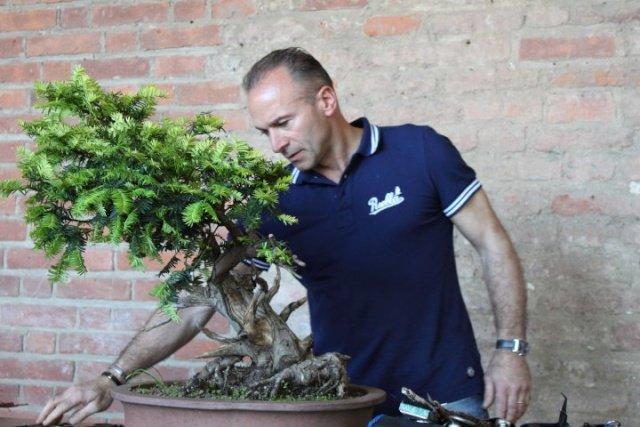 Il maestro di #bonsai @DonatoDanisi spiega come curare le varietà #Pepper e #Carmona in #inverno #giardinaggio #coltivare https://t.co/8KVyeIHvyn https://t.co/9sMXGJarpF