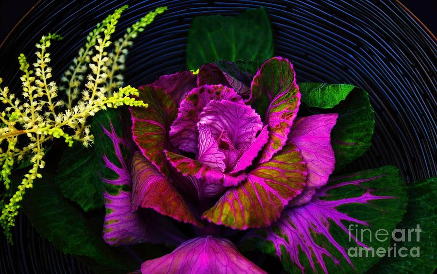 In A Basket #floral #Photography #DianaMarySharpton #Richardson #Texas https://t.co/BT9ajqi0Do