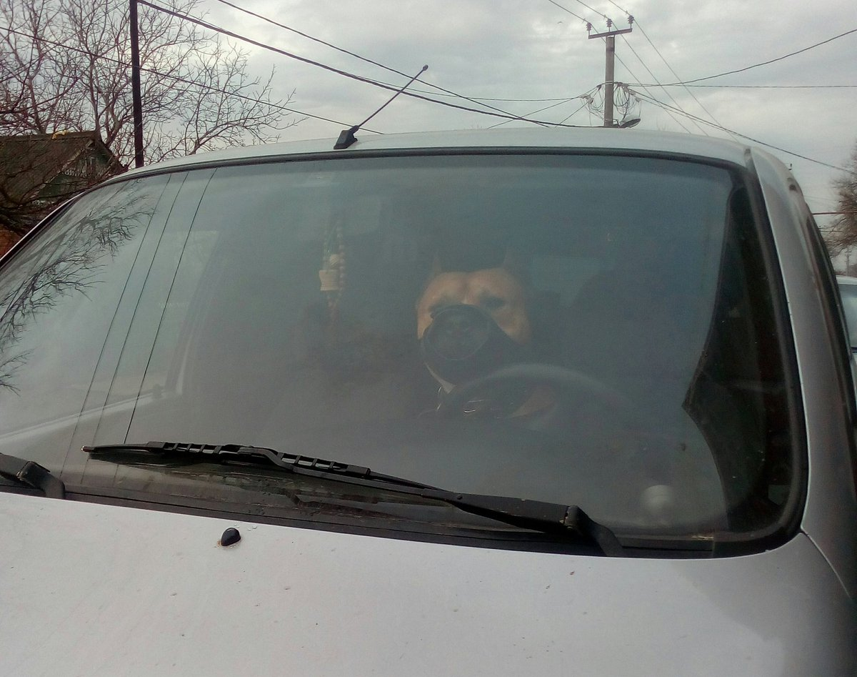 Фото сидит за рулем
