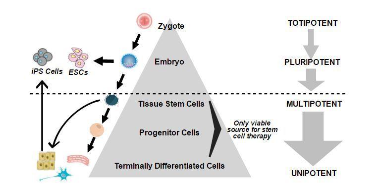 online molecular mechanisms of werners