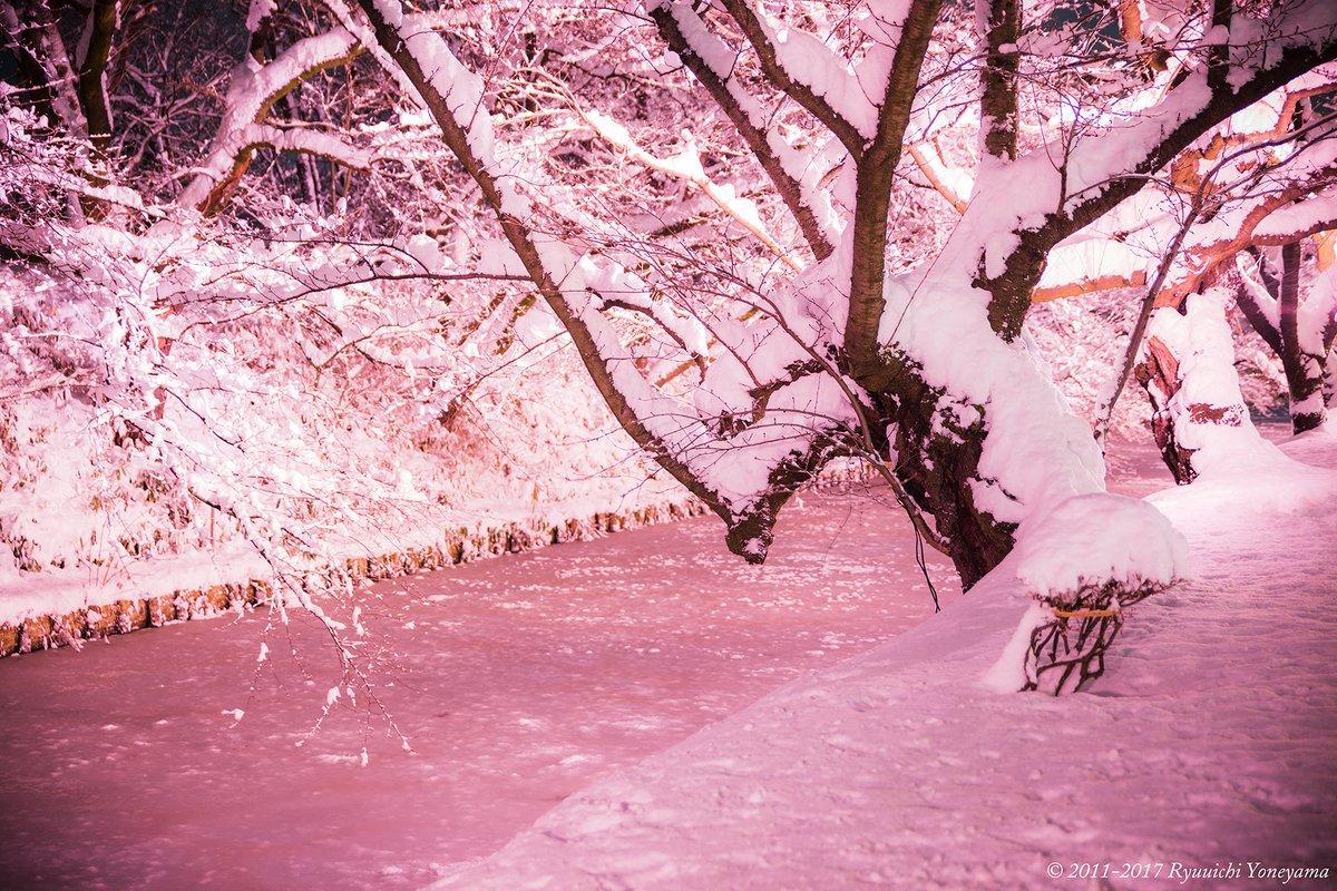 今日の弘前は雪が良く降ったので急遽試験点灯をやり直し、色々撮ってみました。さくらの枝に雪が積もるとと…