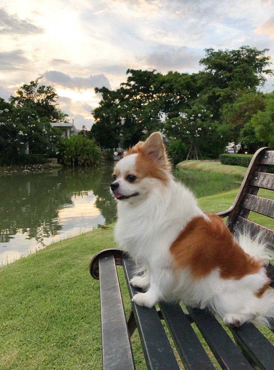 Bien-aimé chiens hashtag on Twitter CQ67