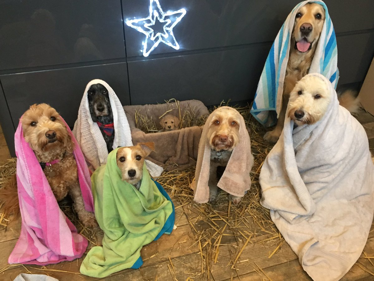 All We Want for Christmas Is This Nativity Scene Filled With Dogs