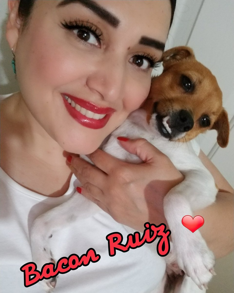 Jackrussel Hashtag On Twitter - Cute portraits baby and rescue dog
