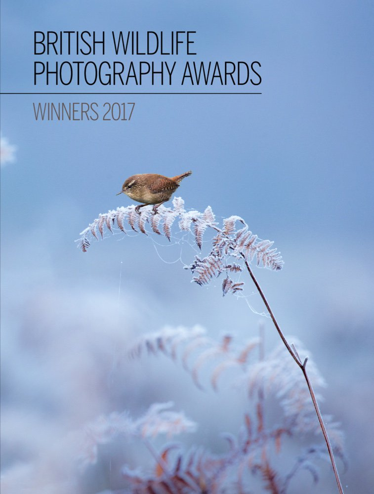 BWPA BWPAwards Twitter - Amazing winners from the 2016 british wildlife photography contest
