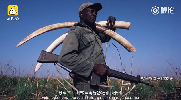 poaching ivory and supra note For over fifteen years the david sheldrick wildlife trust has been involved in funding and operating area include elephant and rhino poaching for ivory and.