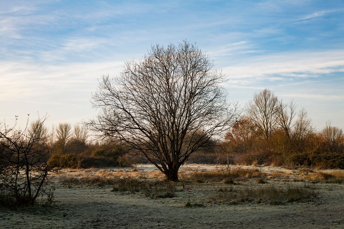 Carys meadow