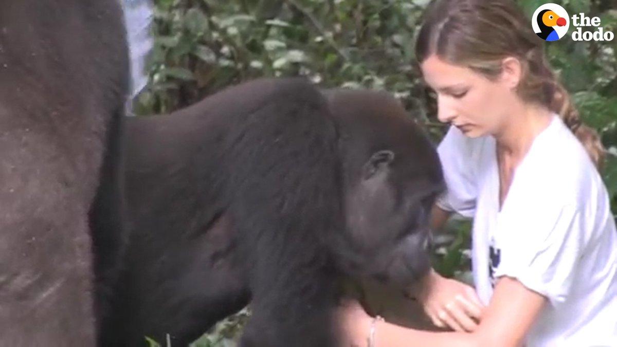 Секс женщины с приматами забавный