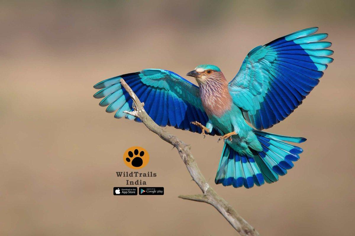 download Girls of Room 28: Friendship, Hope, and