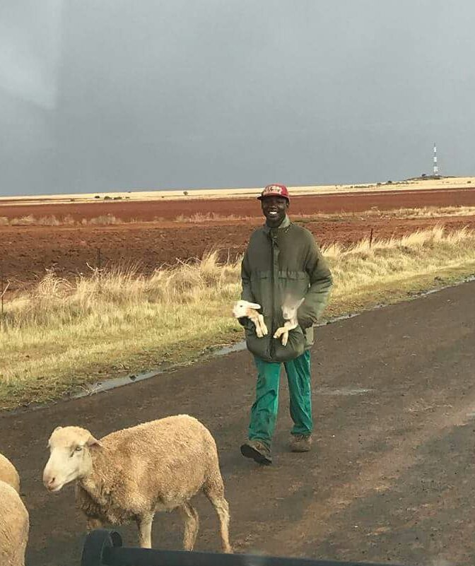 #mySouthAfrica #sheepherder carrying lambs keeping them from harm #IloveRSA